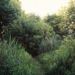 onondaga trail