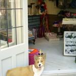 Corgis and passementerie www.ShopCurious.com