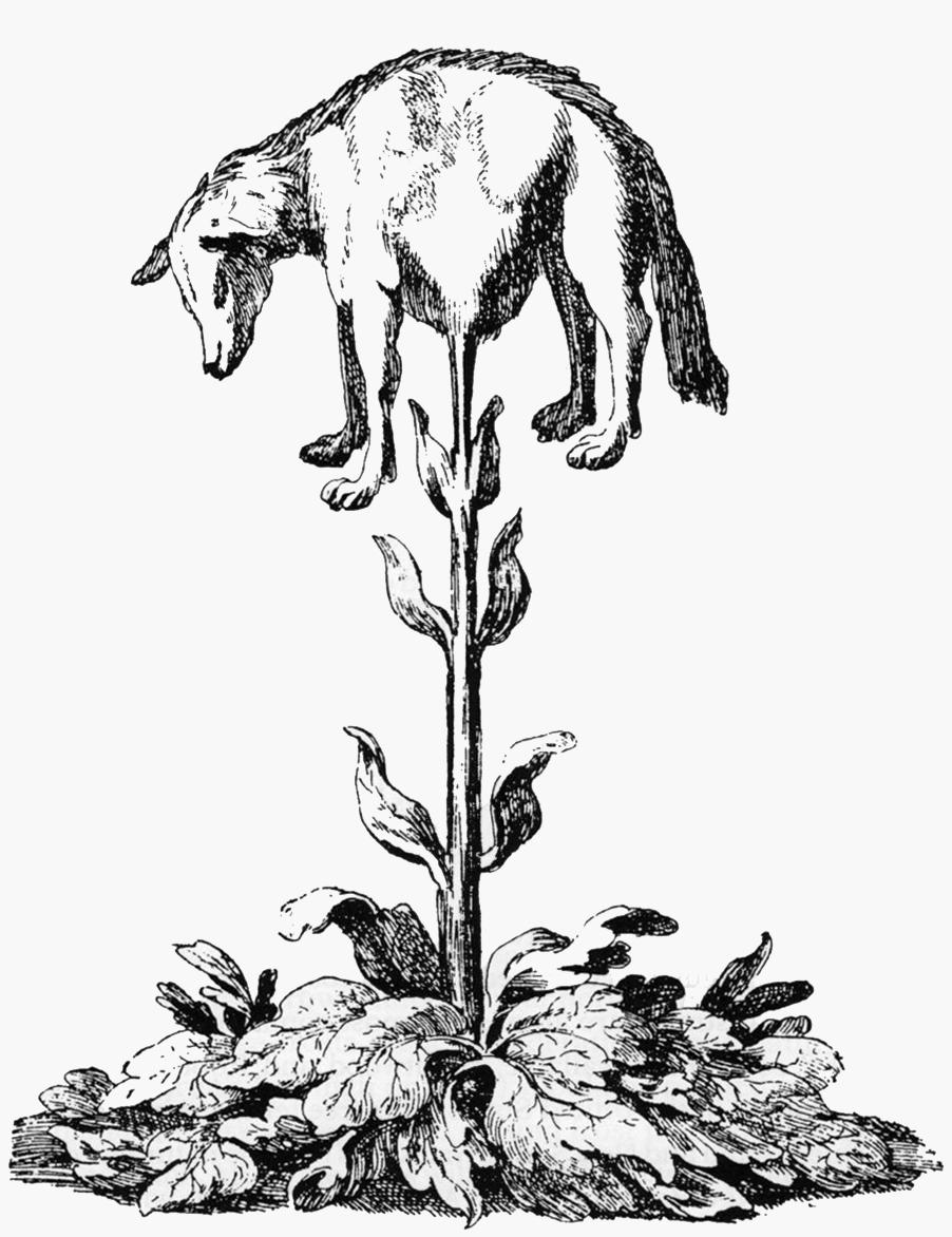 vegetable lamb