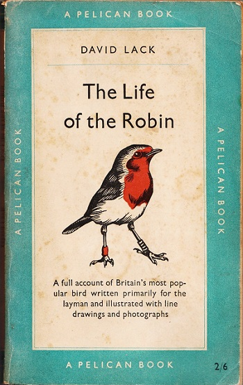 life of the robin