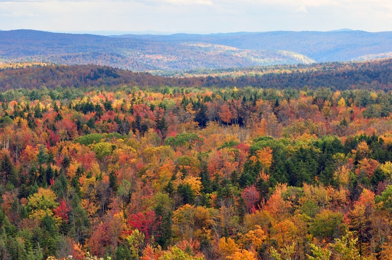 Invasion Of The Leaf Peepers The Dabbler