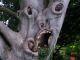 ugly tree