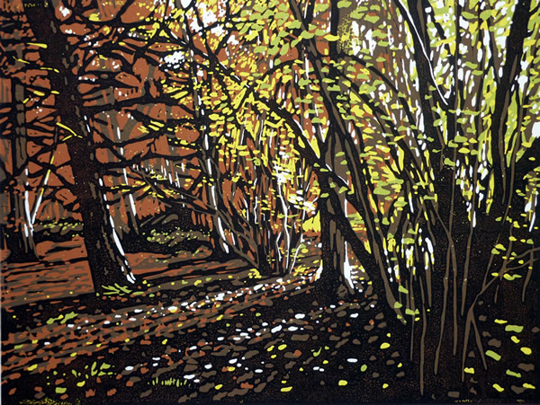 Autumn Colour (at Stoke Wood), 2013