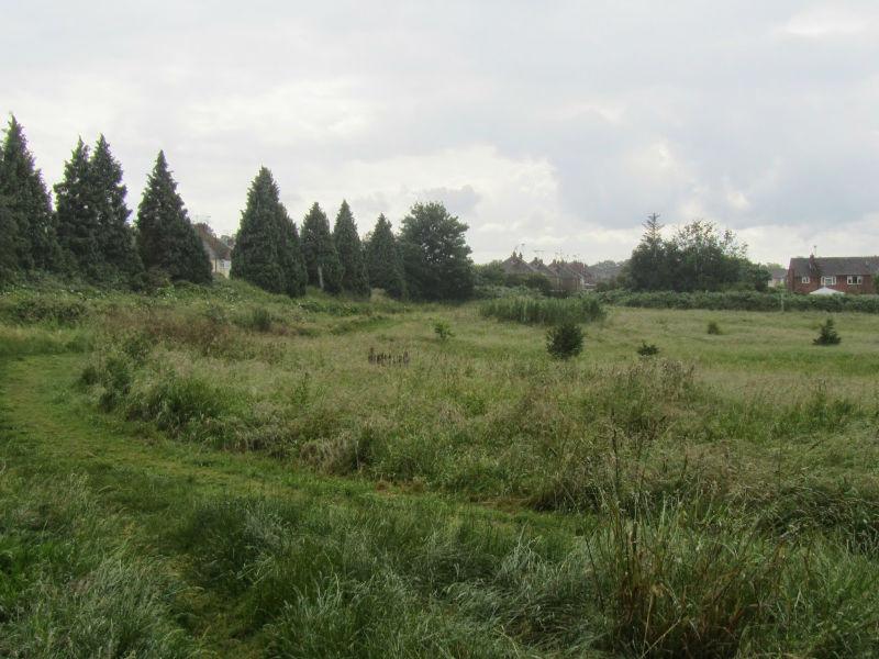 newty field