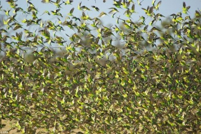 cicada-swarm-2-800x530