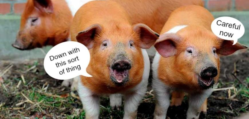 Danish-Protest-Pigs
